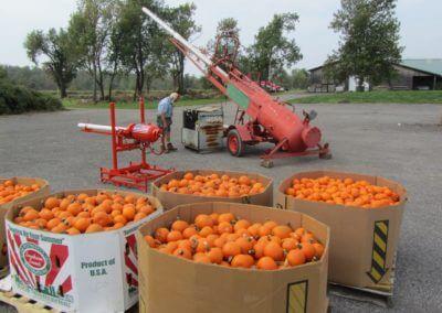 pumpkins.days - 3